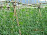 Lưới căng cây leo Minh Dương  tại Ngọc Hồi HN