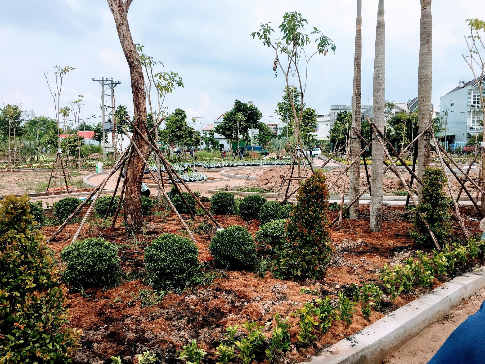 Dịch vụ trồng cây cảnh tại nhà tphcm
