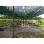 lưới lan, lưới che nắng