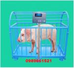 Cân gia súc điện tử 500kg